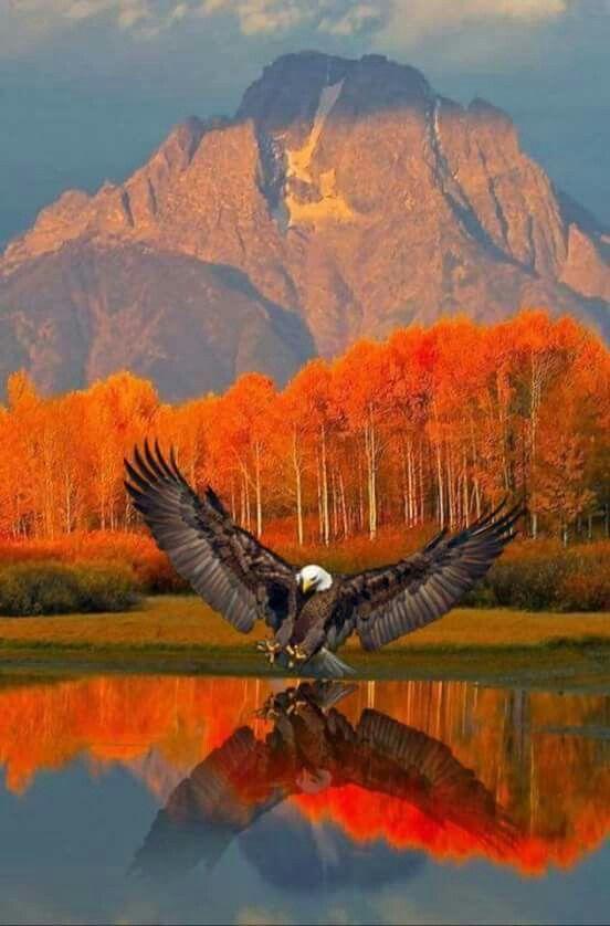 eagleatlake