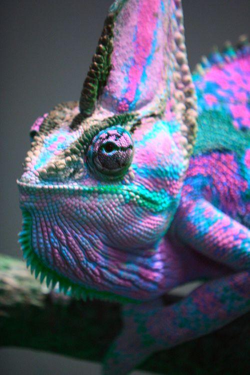 lizardcolor